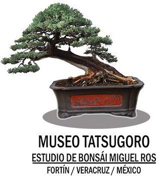 MUSEO TATSUGORO